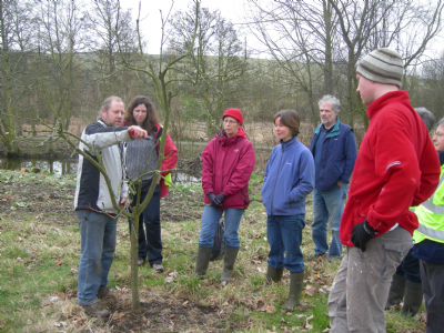 Planting and Pruning Fruit Trees in 2013